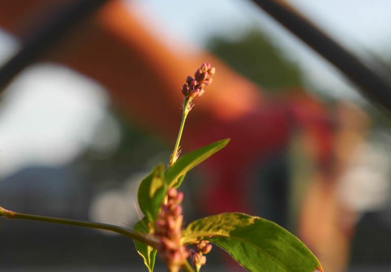 flower-1340141