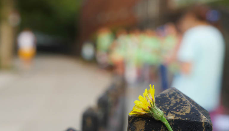 flower-1340655