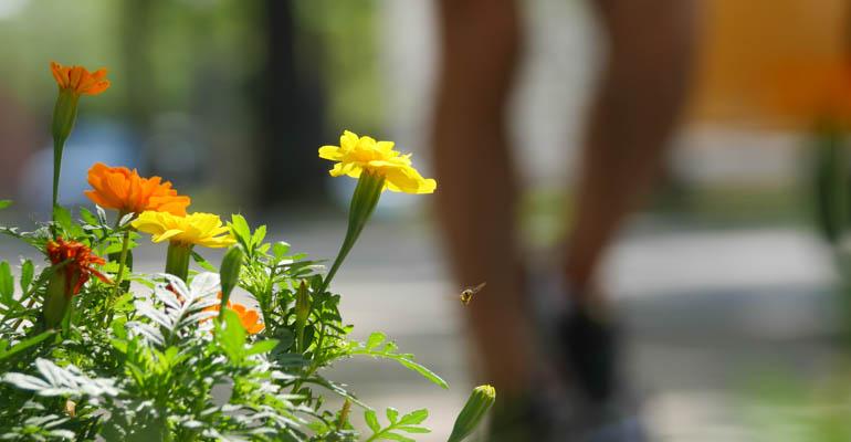 flower-1340786