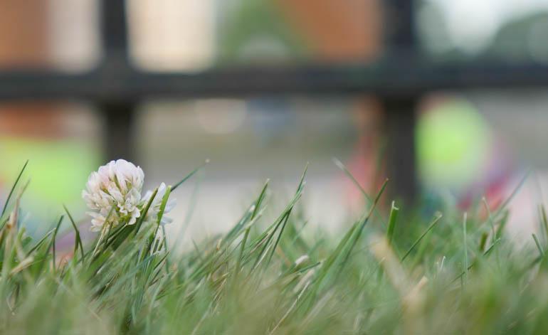 flower-1340985