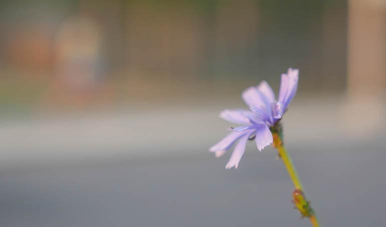 flower-1360235