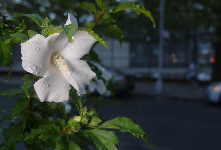 flower-1380534