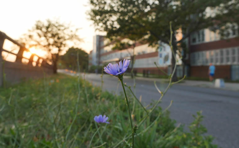 flower ananda-lahari-1300986