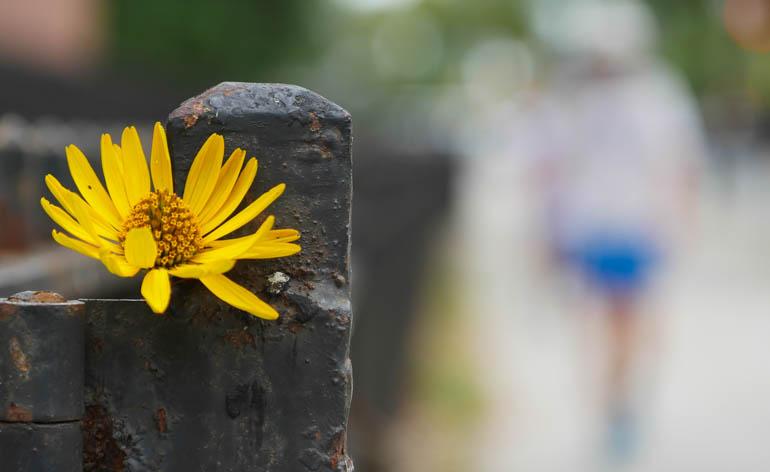 flower ananda-lahari-1370339