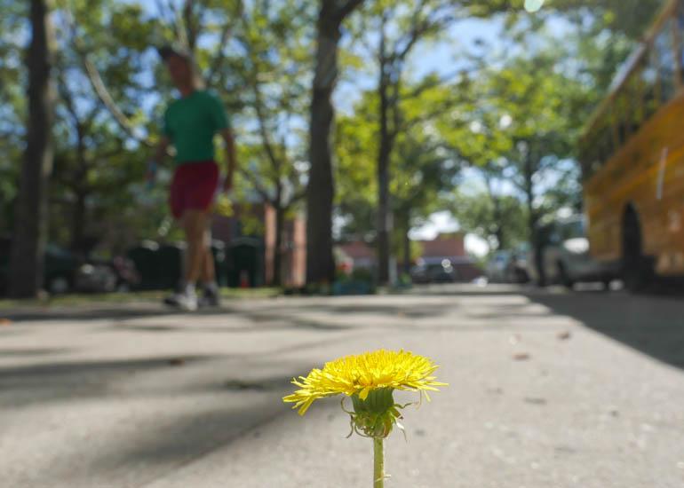 flower ashprihanal-1320654