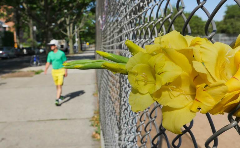 flower ashprihanal-1320987