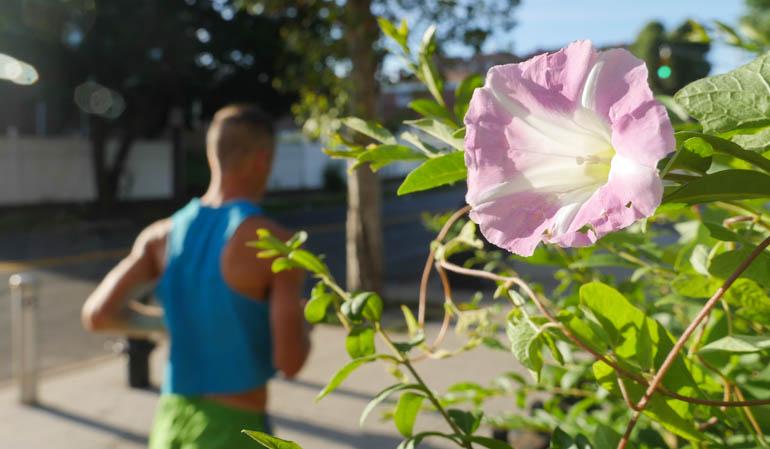 flower atmavir-1320628