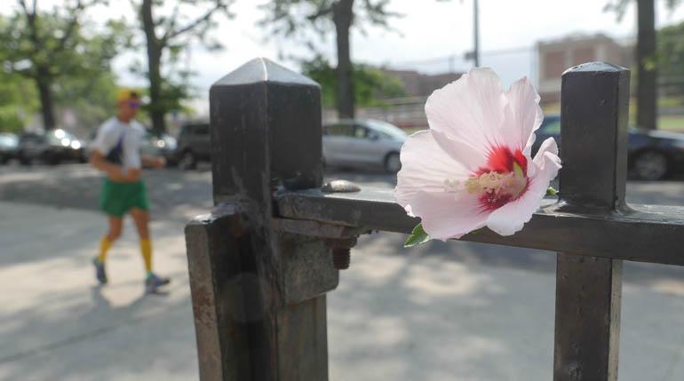 flower atmavir-1330306
