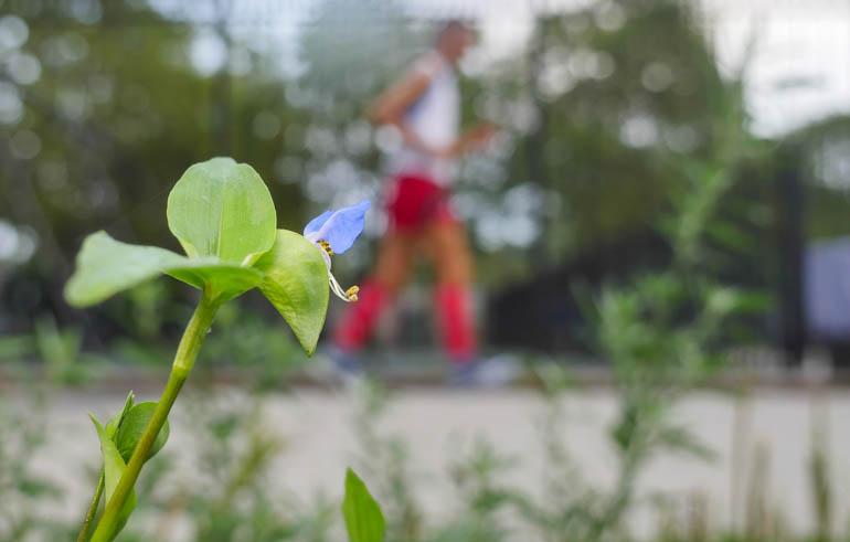 flower atmavir-1330398