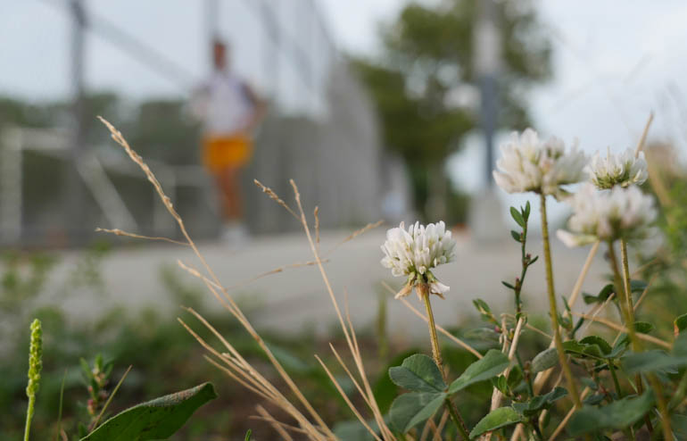 flower atmavir-1340551
