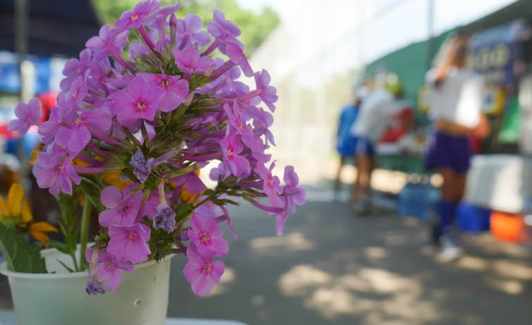 flower atmavir-1360581