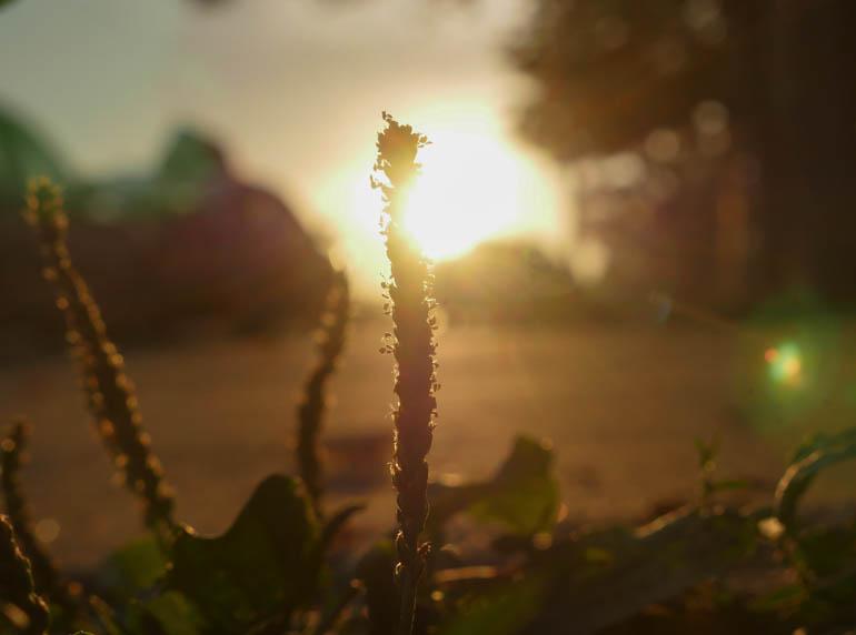 flower dawn-1340881