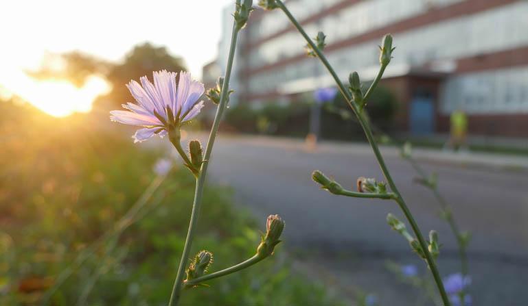 flower dawn-1370405