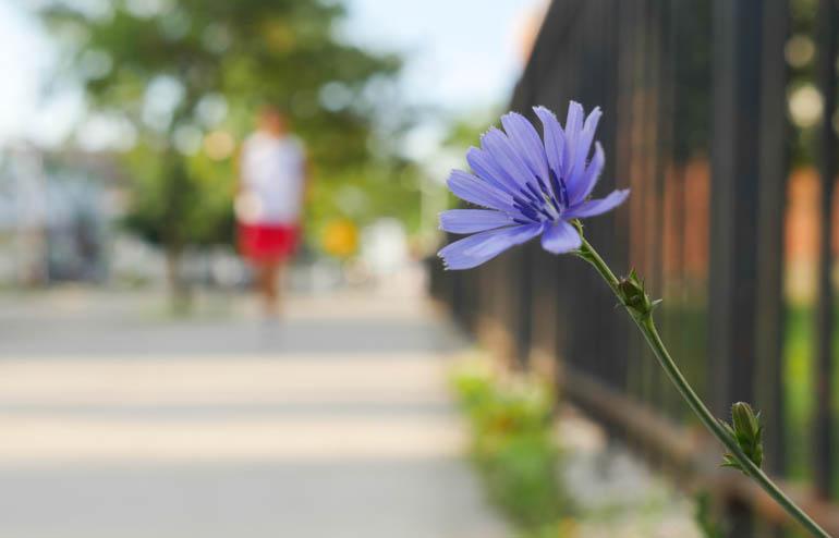 flower fina;-1300777