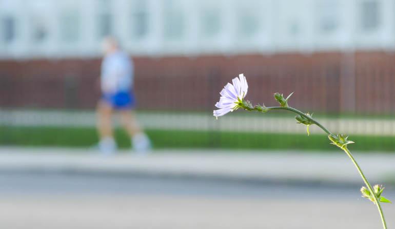 flower final-1290789