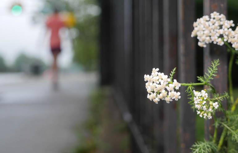 flower final-1300291