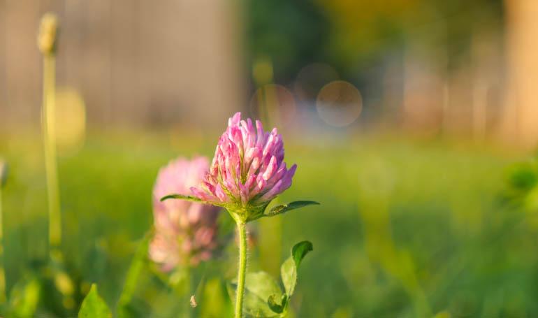 flower final-1300587