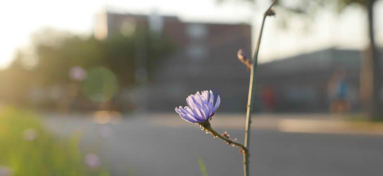 flower final-1310300
