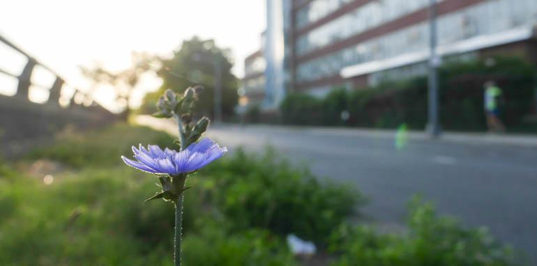 flower final-1320520