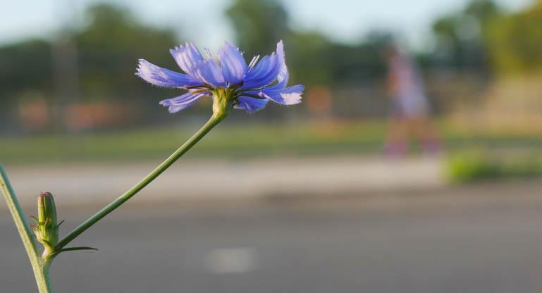flower final-1330850