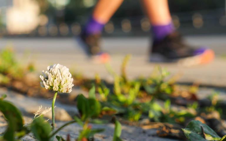 flower final-1330853