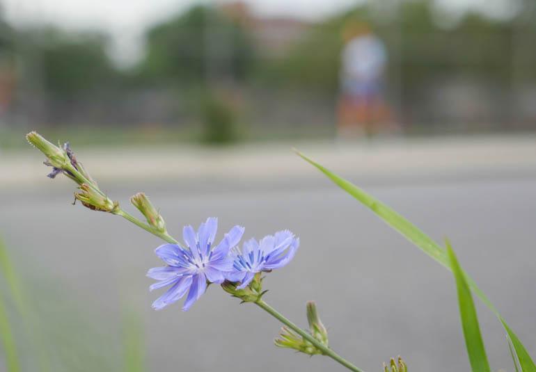 flower final-1340552