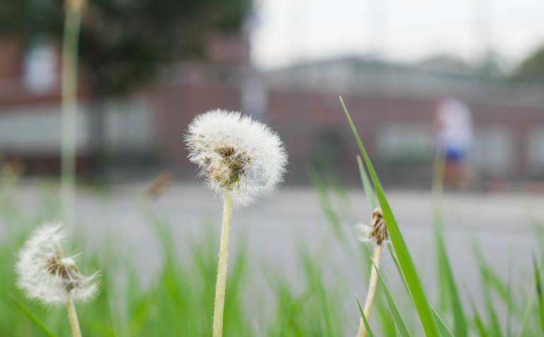 flower final-1340553