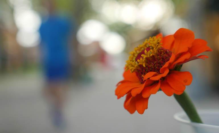 flower final-1340665