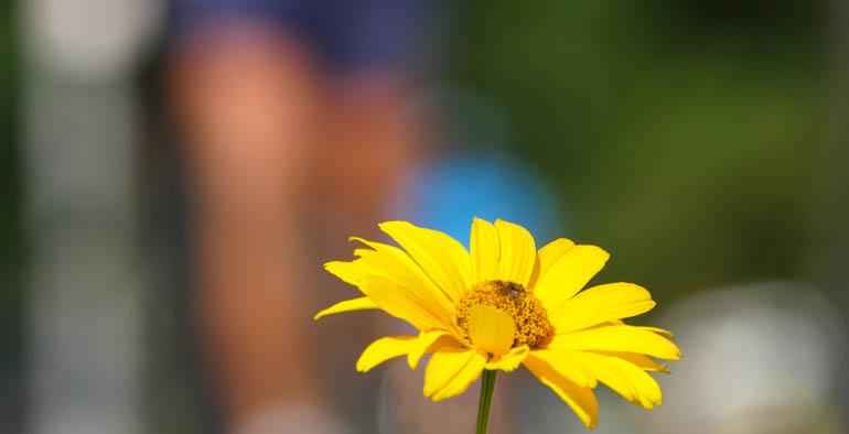 flower final-1350139