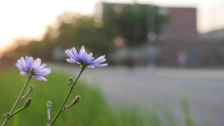 flower final-1360232
