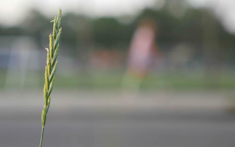 flower final-1360233