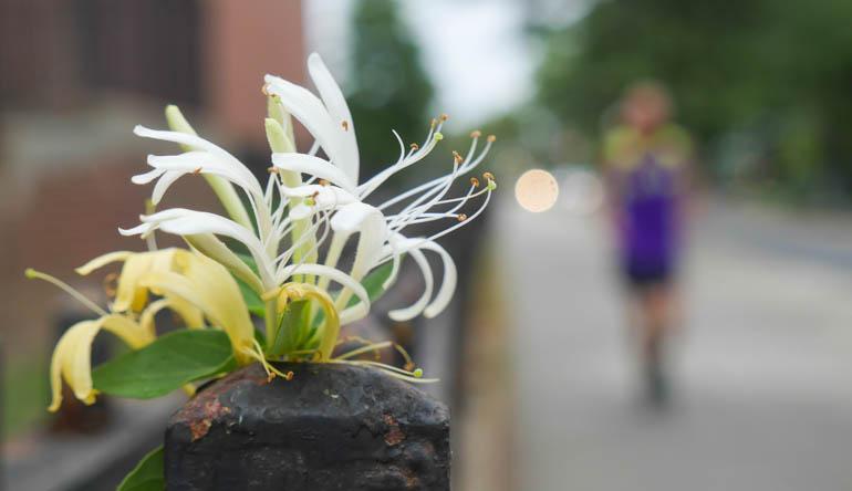 flower final-1370232