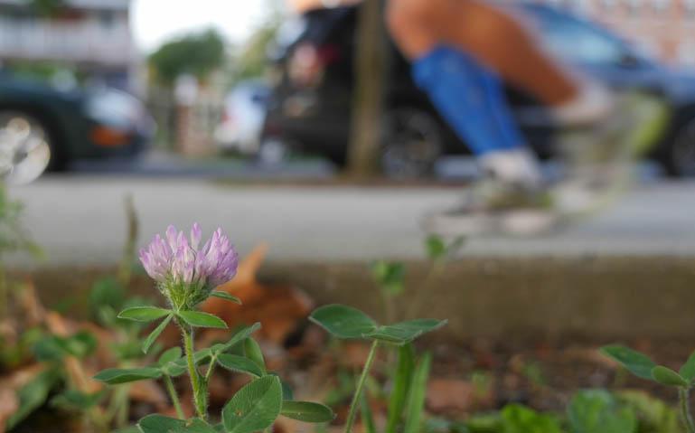 flower final-1380948