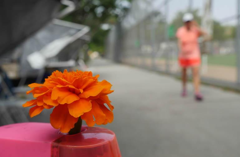 flower kaneenika-1390325