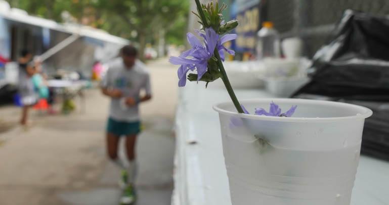 flower sopan-1330549