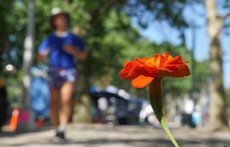 flower stutisheel-1300070
