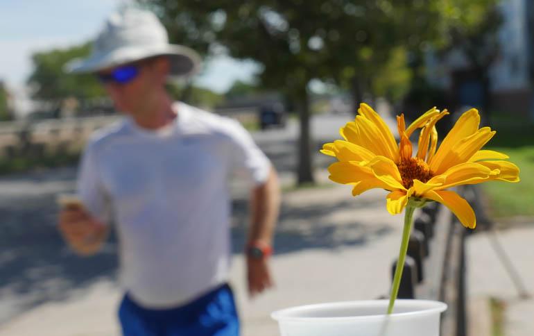 flower stutisheel-1370077