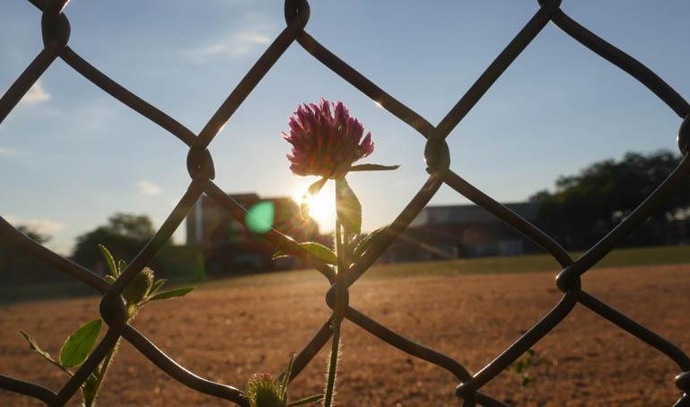 flower sun-1290355