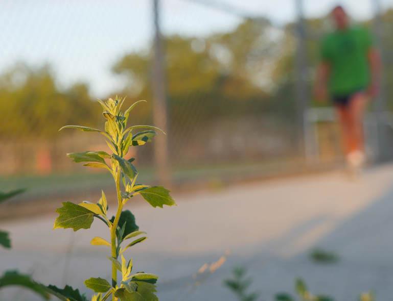 flower vasu-1330779