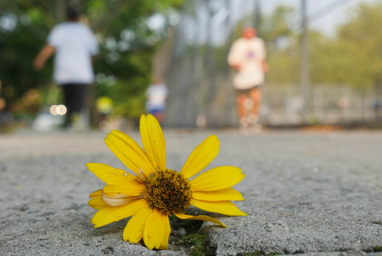 flower yuri-1390247