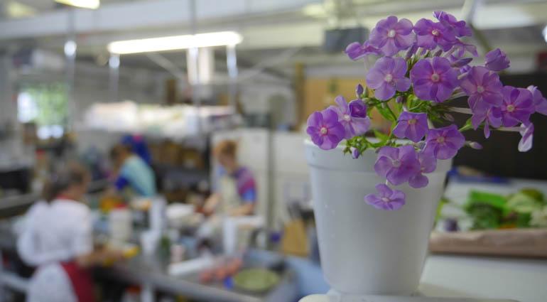 kitchen flower-1310585