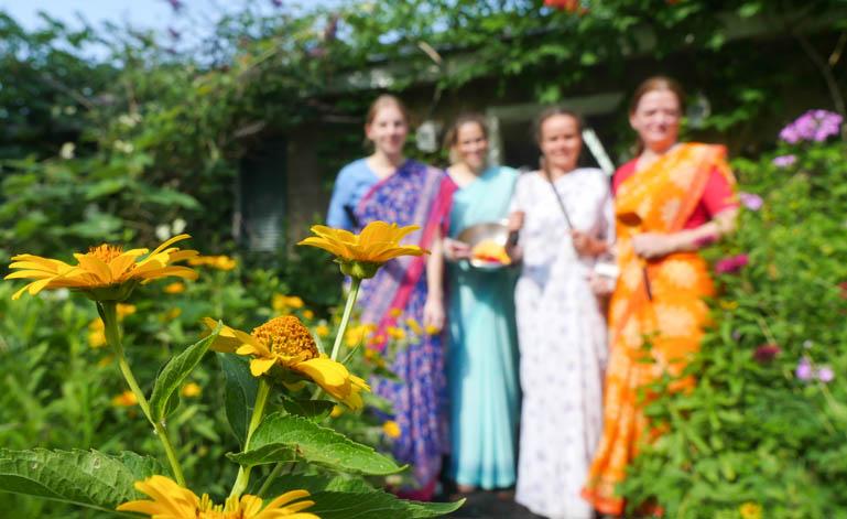 kitchen flower-1310601