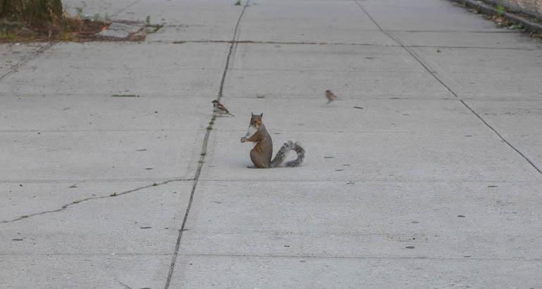 pre squirrel-1340841