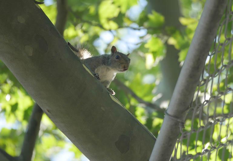 squirrel-1300082
