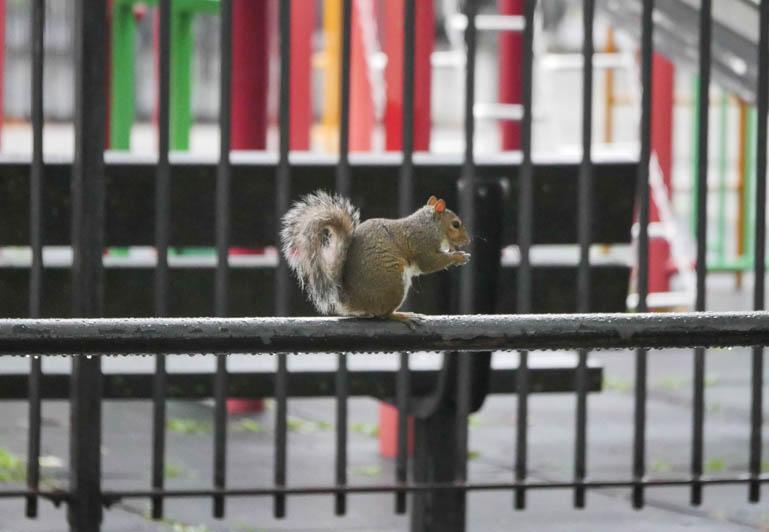 squirrel-1300333