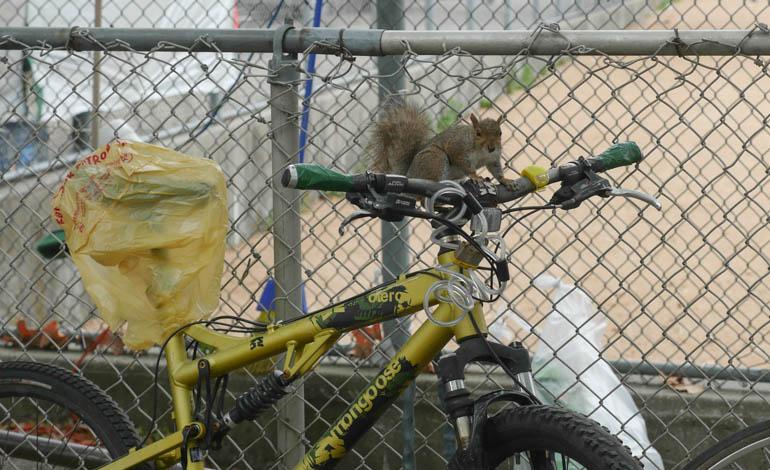 squirrel-1310962