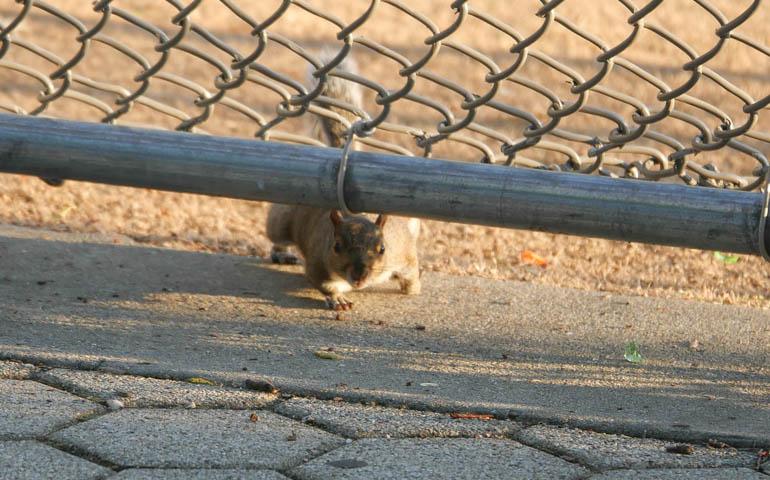 squirrel-1320767