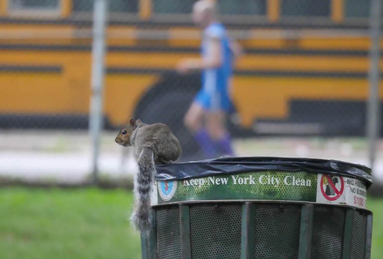 squirrel-1330494