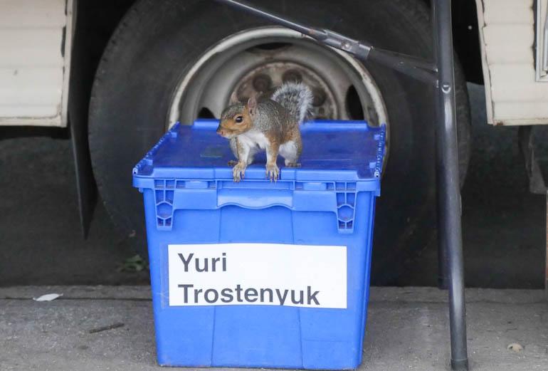 squirrel-1360605