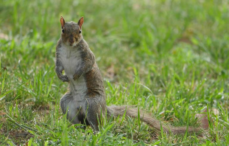 squirrel-1390191